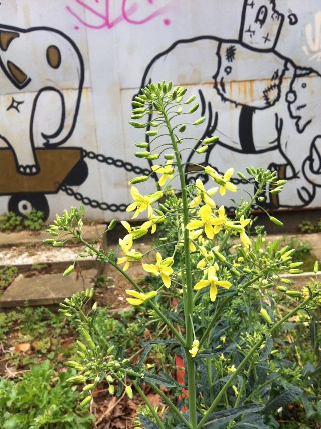 heygate garden