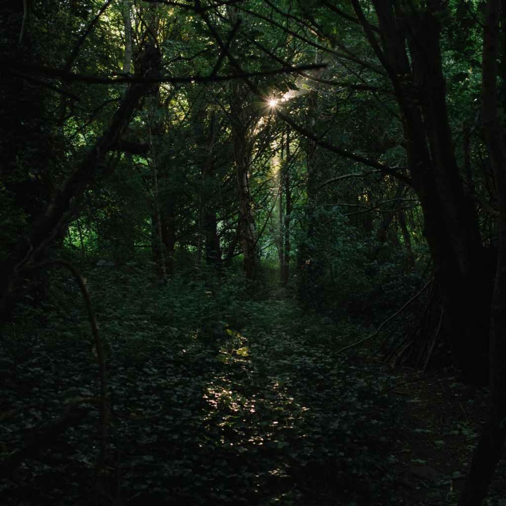 woodland at dusk